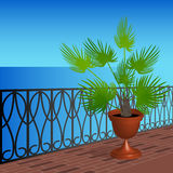 Balcony with a palm tree in a pot. Balcony overlooking the sea and a palm tree in a pot Royalty Free Stock Images