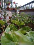Balcony& x27; pequeño jardín de s imagenes de archivo