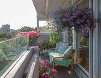 Balcony plants, beautiful different colored flowers, blu sky stock photos