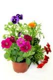 Balcony plants Royalty Free Stock Photos