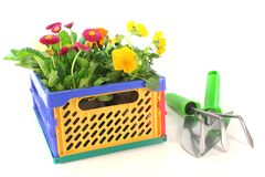 Balcony plants in a folding box. With shovel and grubber Stock Image