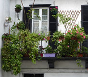 Balcony with plants Stock Photography