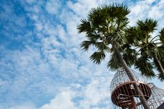 Balcony and sugar Palm trees royalty free stock image