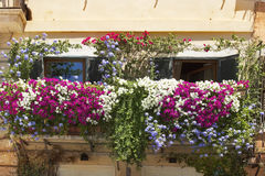 Balcony twined with flowers of petunias Stock Photo