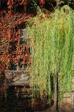 Balcony and window with Fall ivy stock photos