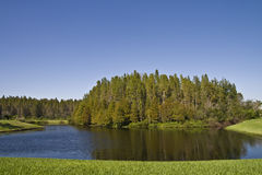 Bald Cypress Cluster on Pond Stock Photos