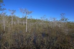 Bald Cypress Forest Stock Photo