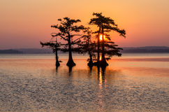 Bald Cypress trees, Reelfoot Lake, Tennessee State Park. Bald Cypress trees silhouetted in the morning twilight at Reelfoot Lake State Park in Tennessee Royalty Free Stock Images