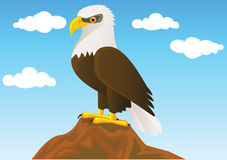 Bald eagle Stock Photos