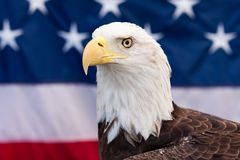 Bald Eagle. And the American flag in the background Royalty Free Stock Images