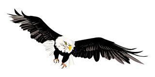 Bald eagle. Illustartion of bald eagle wing-spread Royalty Free Stock Photos