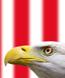 Bald Eagle. A bald eagle profile with a flag background Royalty Free Stock Photography