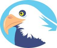 Bald Eagle vector illustration