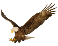 Free Bald Eagle Royalty Free Stock Image - 66975456