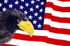 Bald Eagle. In guarding American Flag Stock Photo