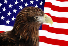 Bald Eagle. In guarding American Flag Royalty Free Stock Images