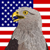 Bald eagle against the United States of America`s flag Stock Images