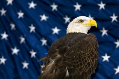 Bald Eagle Against USA Flag. The national bird of the United States Of America, the majestic bald eagle against a Flag background Royalty Free Stock Photography