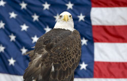 Bald Eagle Against USA Flag. The national bird of the United States Of America, the majestic bald eagle against a Flag background Stock Photo