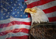 Bald Eagle and American Flag. An American flag is flowing in the background and there is a bald eagle in the foreground. There is a worn, texture to the photo Stock Photos