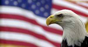 Bald eagle and American flag. Portrait of bald eagle with American flag in background Royalty Free Stock Photos