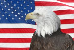 Bald Eagle and American Flag. The Bald Eagle, which is the national bird of the United States of America, set against a background of the Flag of the United Stock Photo