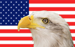 Bald eagle and american flag. Bald eagle with the american flag in the background Royalty Free Stock Photography