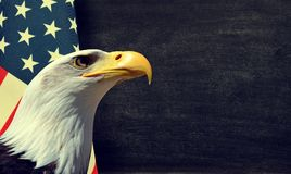 Bald Eagle and American flag. With copy space stock image