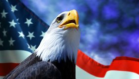 Bald Eagle and American flag. Bald Eagle and American flag with dark storm clouds at the background Stock Photography