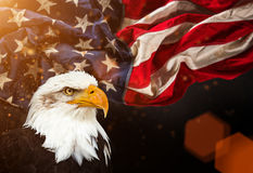 Bald Eagle with American flag Royalty Free Stock Photos