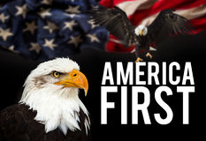 Bald Eagle with American flag Royalty Free Stock Images