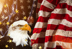 Bald Eagle with American flag Stock Image