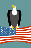 Bald eagle and American flag. USA national symbol of bird. Large birds of prey and flag state Stock Image