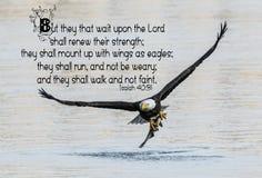 Bald Eagle Bible Verse stock photos