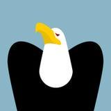 Bald Eagle. Birds of prey portrait. Hawk on blue background Stock Images
