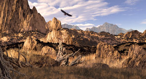 Bald Eagle in the Colorado Rockies. Image from an original 13x24 painting of a bald eagle soaring in the Colorado Rockies. / SW-013 Stock Images