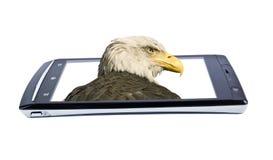 Bald eagle on display smartphone. Collage Stock Photo