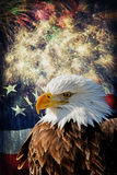 Bald Eagle &  Fireworks Stock Image
