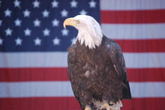 Bald Eagle with Flag 2 Stock Photo