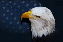 Bald Eagle Before Flag of Stars. Head of a majestic Bald Eagle with piercing gold eyes before a flag of stars Royalty Free Stock Image