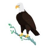 Bald Eagle Flat Design Vector Illustration Royalty Free Stock Photo