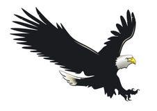 Bald eagle in flight. Illustration of bald eagle in flight, isolated on white background royalty free illustration