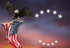 Bald Eagle flying with American flag. Flying North American Bald Eagle with American flag Royalty Free Stock Photos