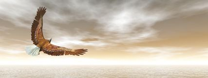 Bald eagle flying - 3D render Royalty Free Stock Photography