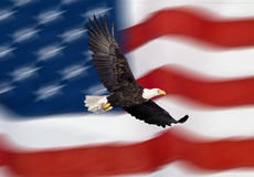 Bald eagle flying in front of the American flag. With motion look Stock Image
