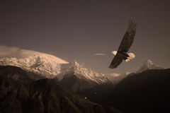 Bald Eagle flying over a Mountain Valley. An amazing bald eagle soaring through a mountain valley with the stars glowing and snow on the mountains Royalty Free Stock Photo