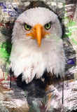 Grunge bald eagle Stock Photo