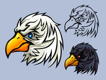 Bald Eagle Head Royalty Free Stock Photography