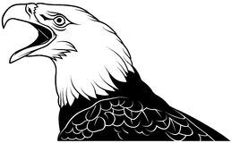 Bald Eagle Head Royalty Free Stock Photos