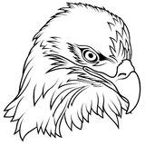 Bald Eagle Head Stock Image